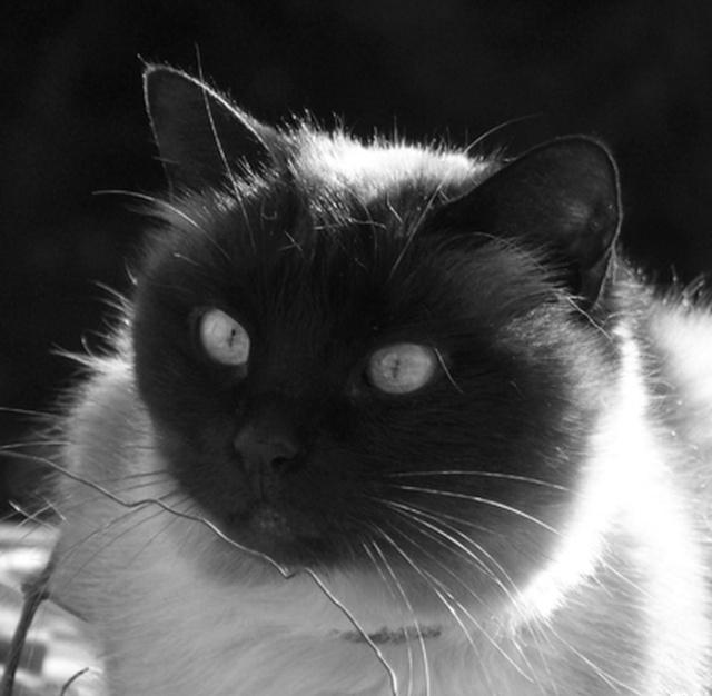 mes photos noir et blanc  Jjjjj_10