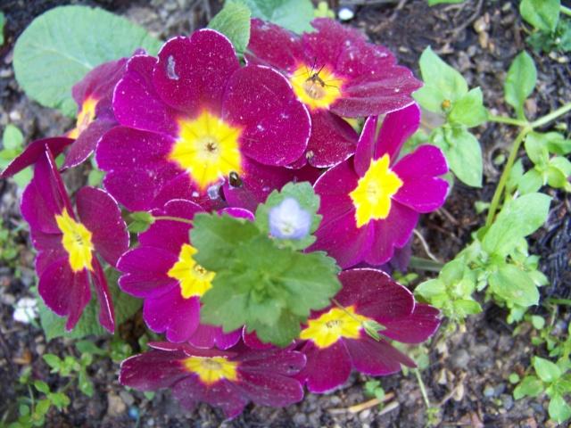 Que des fleurs  Melang89