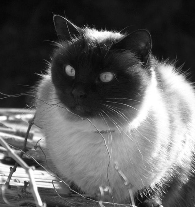 mes photos noir et blanc  Yjyj_b10