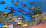 Divers - Aquariophilie