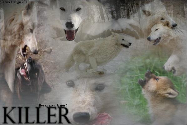 Boutik's Cadoo 2010 - Page 5 Killer10