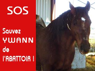 Ebène est SAUVE sur www.actuanimaux.com... grâce à vous. Ywann10