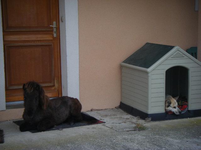VENDREDI - Poney typé Shetland né en 2009 - adopté en février 2010 par oramai-di-maggio - Page 3 Dscf9910