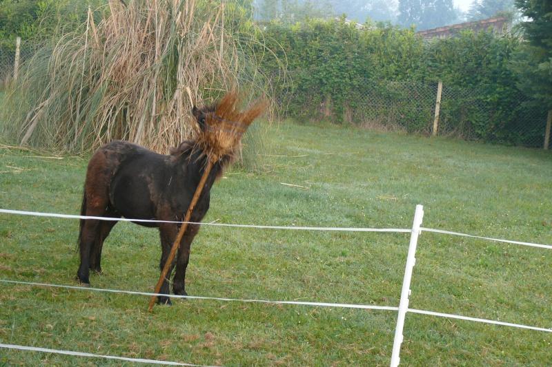 VENDREDI - Poney typé Shetland né en 2009 - adopté en février 2010 par oramai-di-maggio - Page 4 P1080917