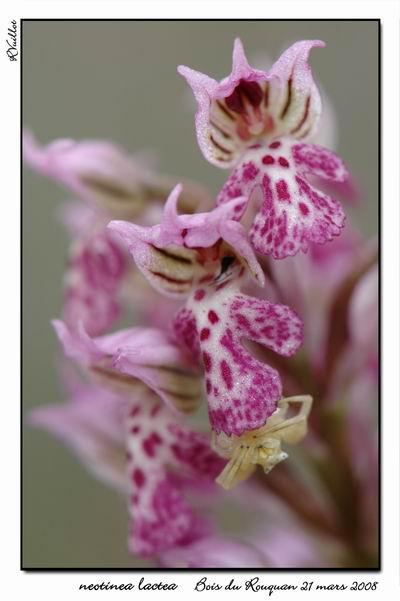 orchidées et araignées 08_fds10