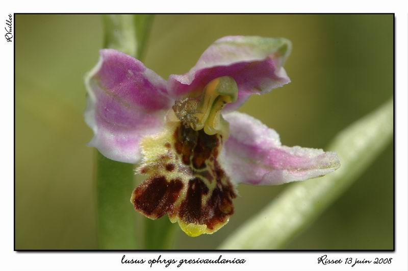 orchidées et araignées 08_fds13