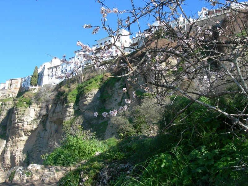 Andalousie (2) Antéquéra-Olvéra-Ronda-Séténil de la Bodégas 06310