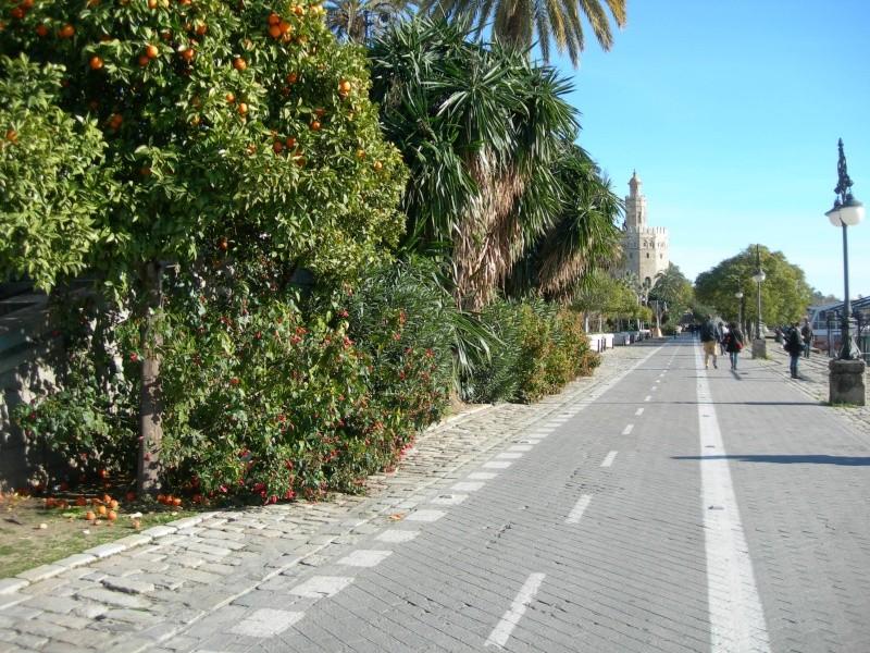Andalousie (4) Séville 08011