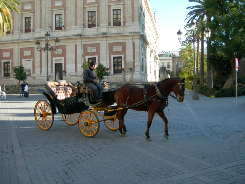 Andalousie (4) Séville 11417