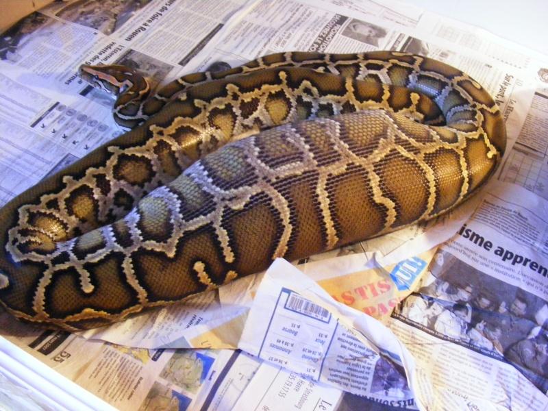 post question python molure 2007_010