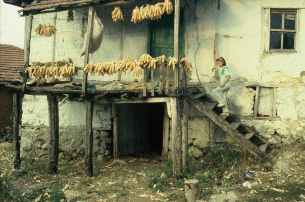 Armutveren /Demirköy/Kırklareli Armutv10