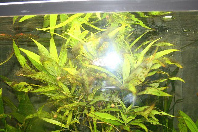 les algues sont de retour Photo142