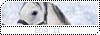 Equestra Dream Academy Bleu_c10