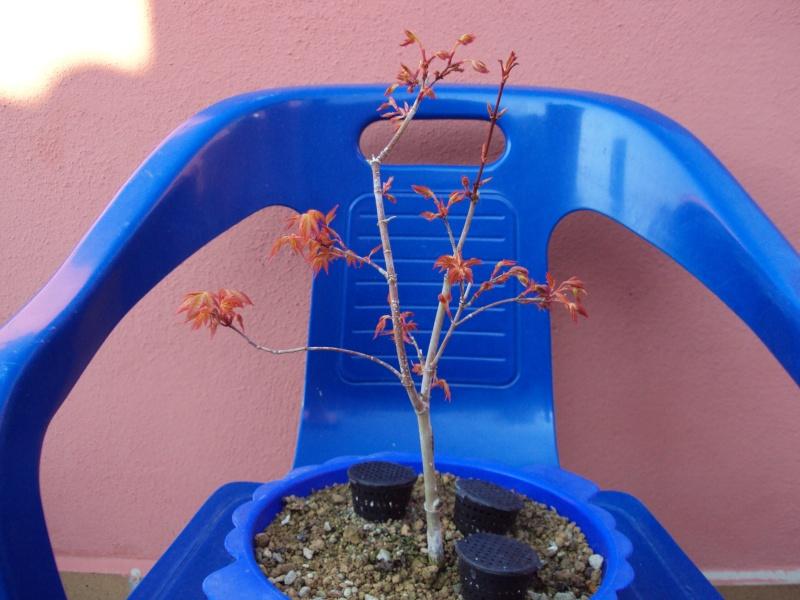 Acer Little Princes  - Página 3 Dsc01311