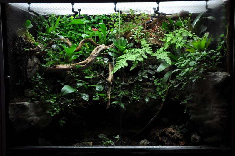 [Fiche] Correlophus ciliatus Dsc_0111