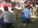 Los Barrios de Luna 2009 Cof310