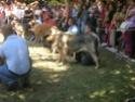 Los Barrios de Luna 2009 Cof410