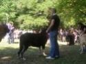 Los Barrios de Luna 2009 Com_510