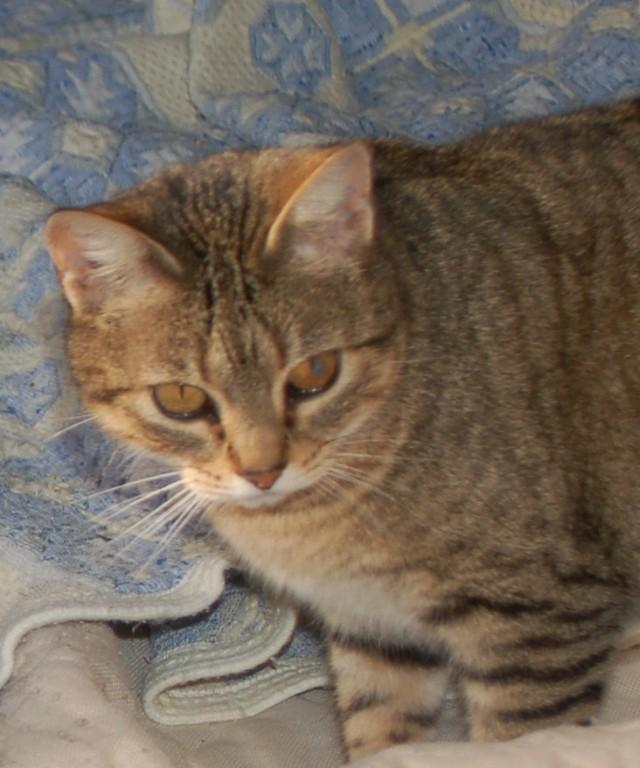 Especialpara los amantes de los animales :-) Migoya10