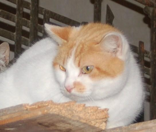Especialpara los amantes de los animales :-) Samy1711