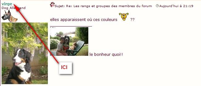 Les rangs et groupes des membres du forum Couleu11