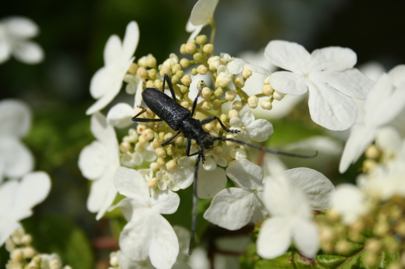 Deux insectes du jardin + une chenille Insect10