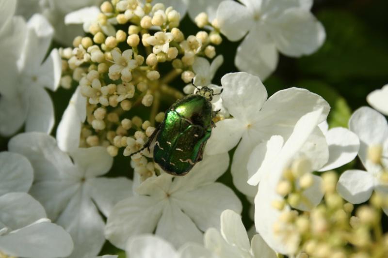Deux insectes du jardin + une chenille Insect11