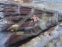 Slinkachu [Street Art] A399