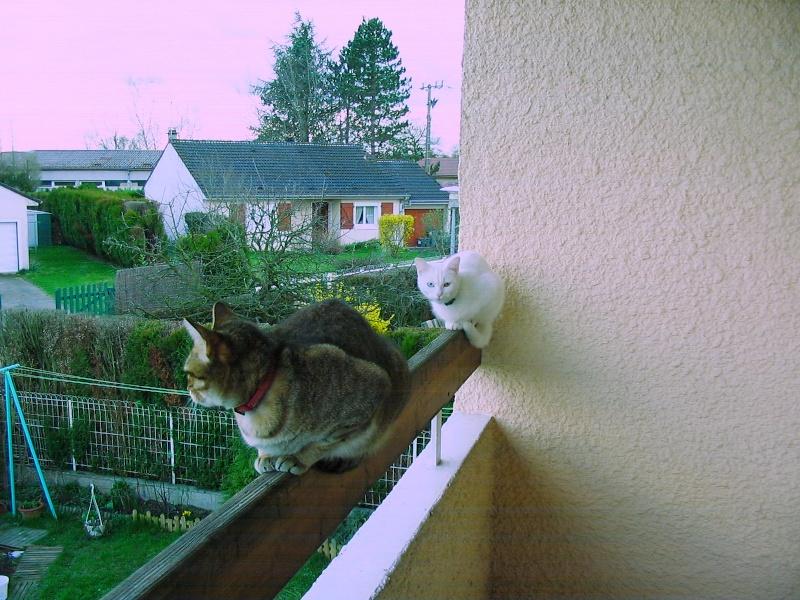 Photos chatons sur mon balcon - Page 2 Duo_2_10