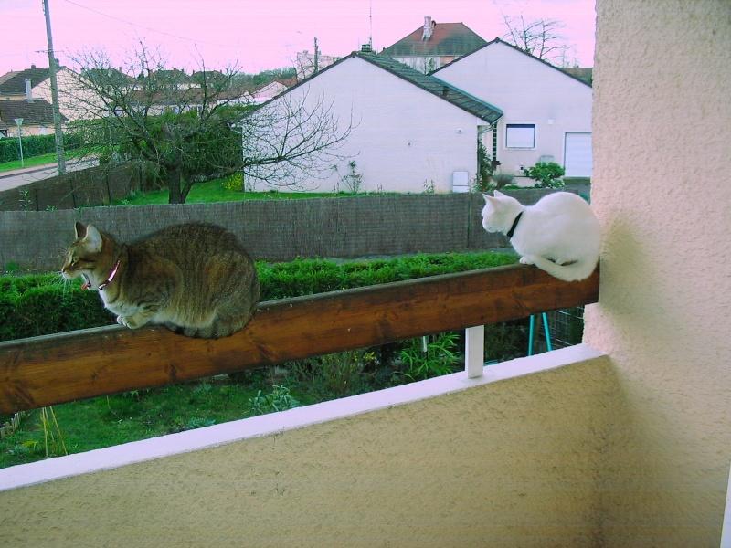 Photos chatons sur mon balcon - Page 2 Duo_su10