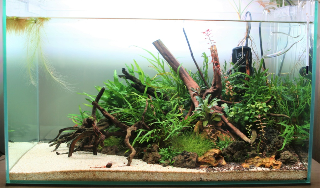 Retour dans l'aquariophilie - Suite avec un bac de 60L - Page 2 01_04_10
