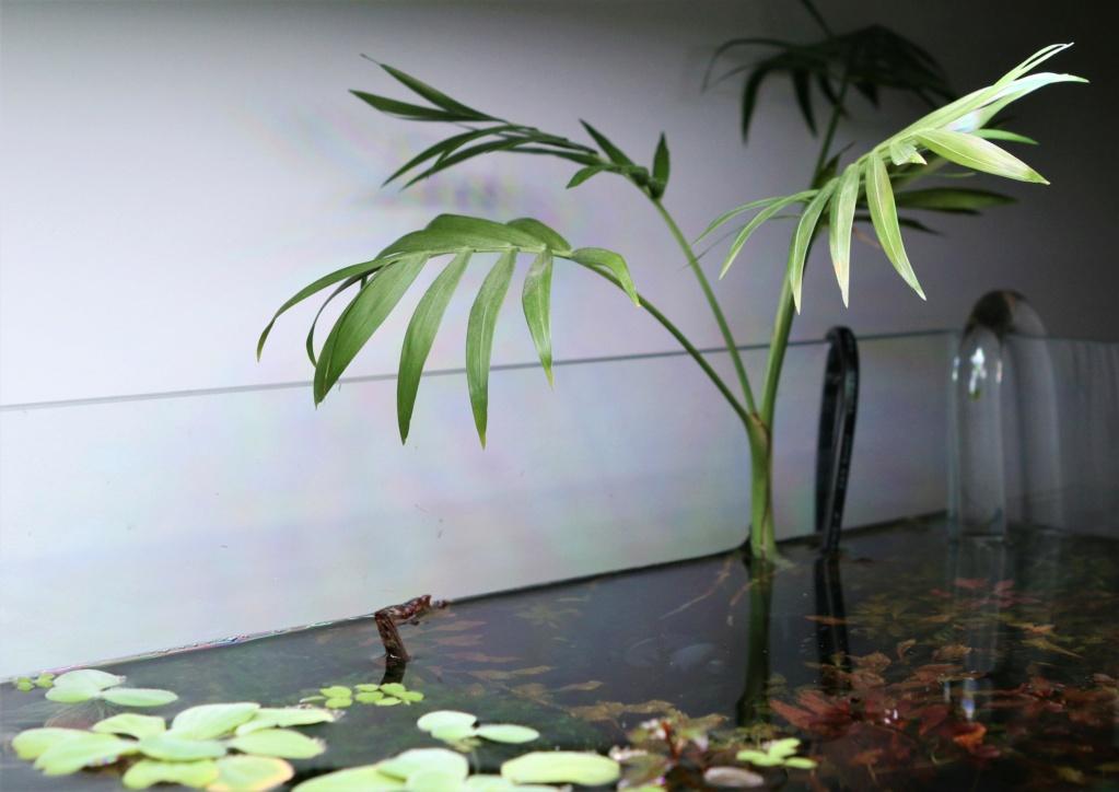 Retour dans l'aquariophilie - Suite avec un bac de 60L 11_11_13