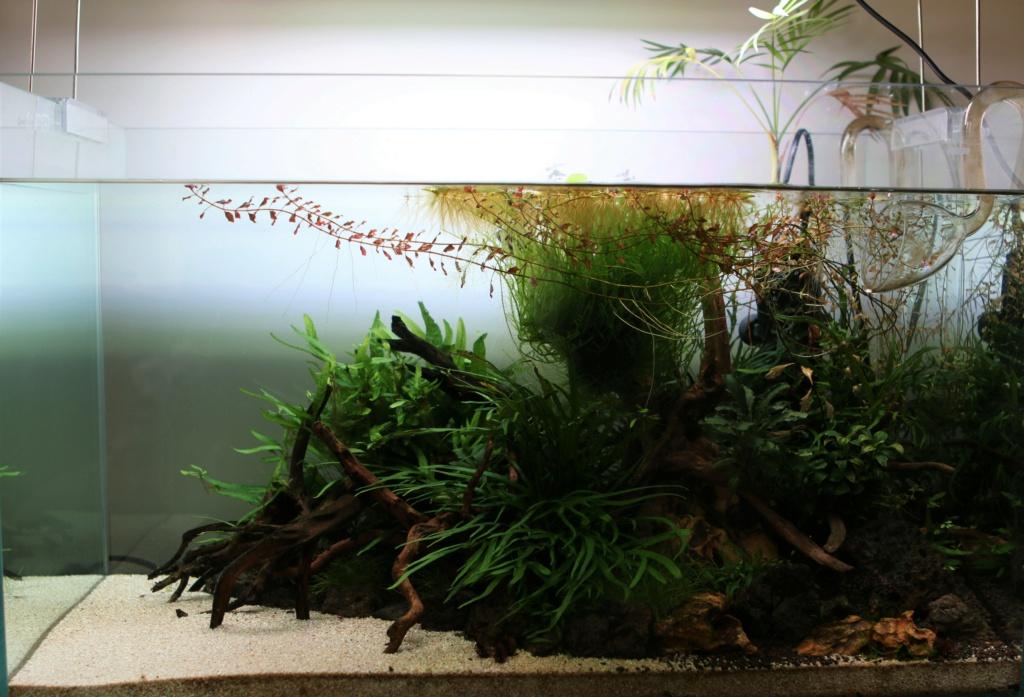 Retour dans l'aquariophilie - Suite avec un bac de 60L 22_03_10