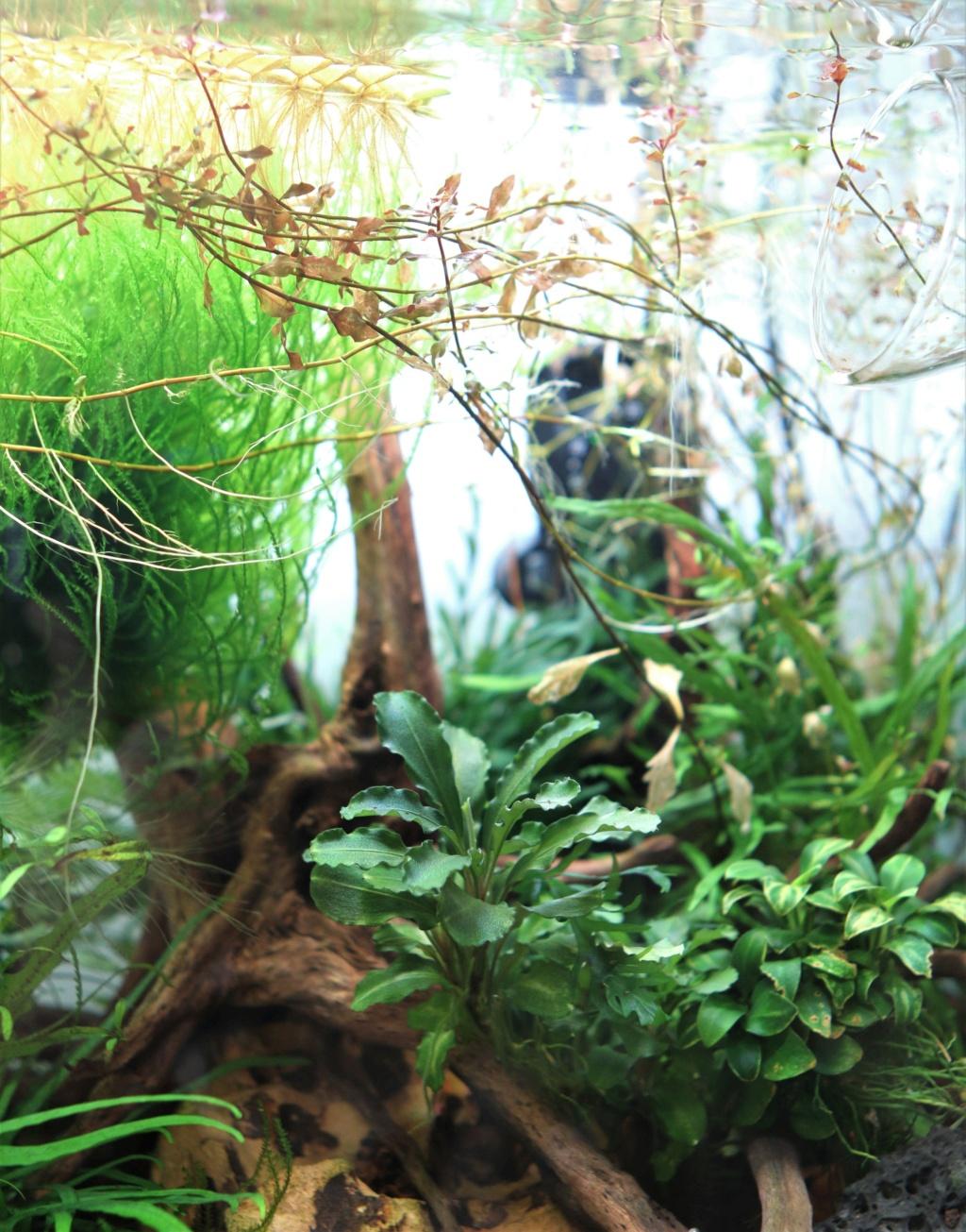 Retour dans l'aquariophilie - Suite avec un bac de 60L 22_03_11