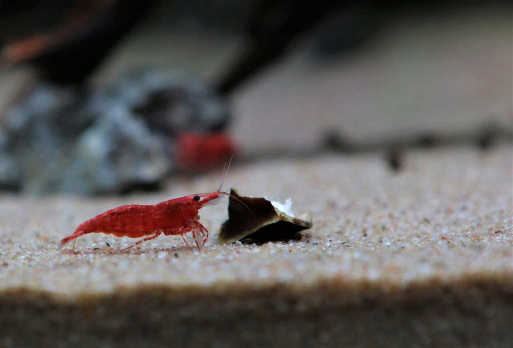 Retour dans l'aquariophilie - Nano Img_6912