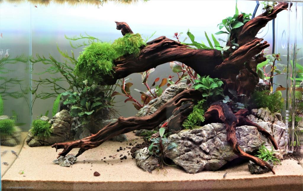 Retour dans l'aquariophilie - Nano Img_7014