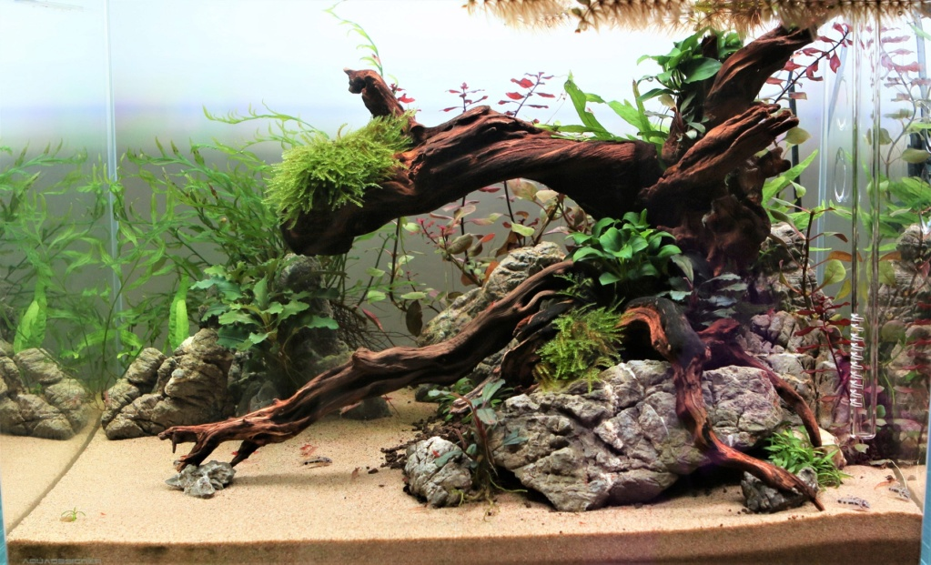 Retour dans l'aquariophilie - Nano Img_7018