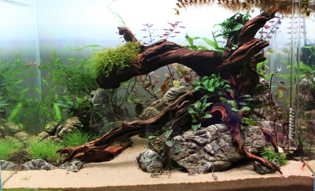 Retour dans l'aquariophilie - Nano Img_7110