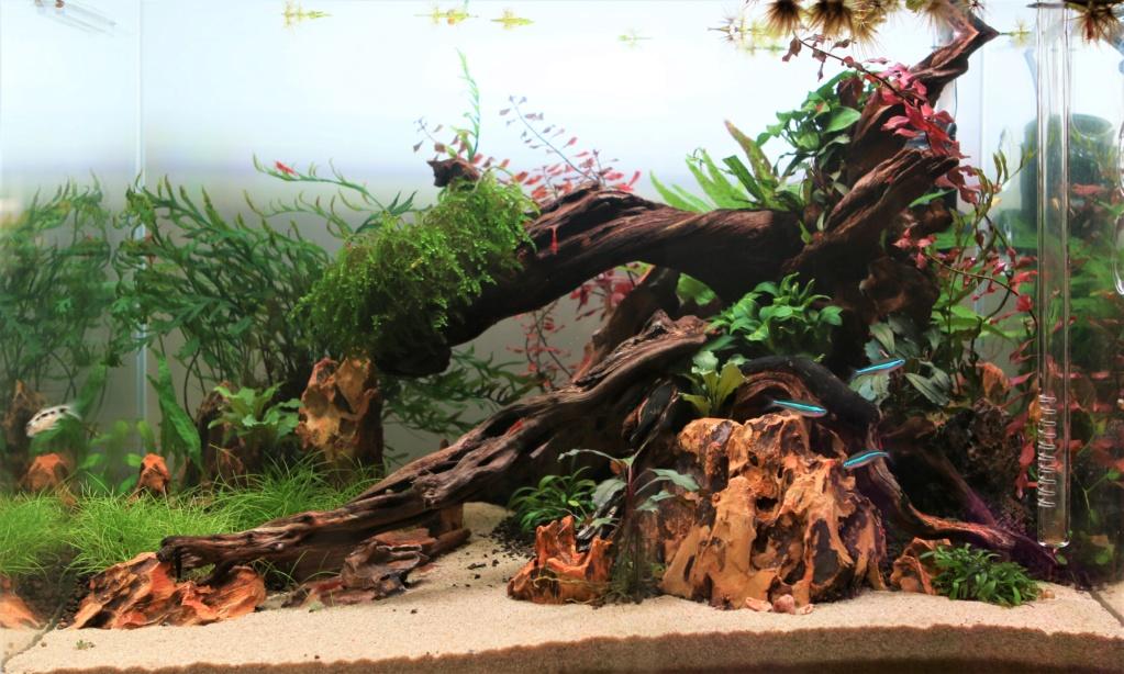 Retour dans l'aquariophilie - Nano Img_7112