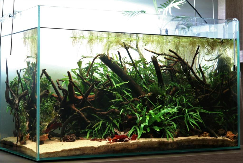 Retour dans l'aquariophilie - Suite avec un bac de 60L - Page 2 Img_7810