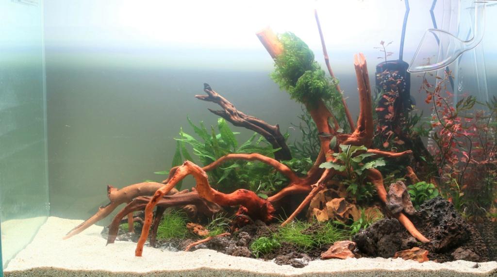 Retour dans l'aquariophilie - Suite avec un bac de 60L Mise_e10
