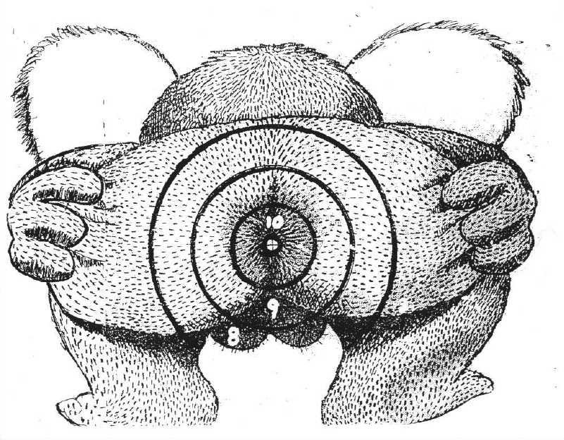Tir au ballon maison - Page 4 Koala12