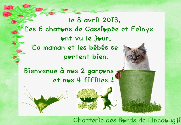 Mariage de Cassiopée et Feinyx 2013 aux Bords de l'Incaougji - Page 2 55126310