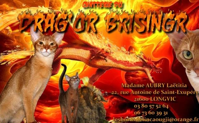 Bienvenue au Drag'Or Brisingr... Abyssi10