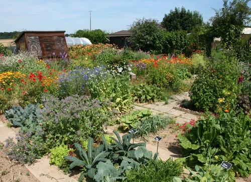 Découvrez le jardin potager de Jardi76 Img00610