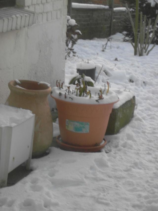 la neige à  braine l'alleud Sdc10118