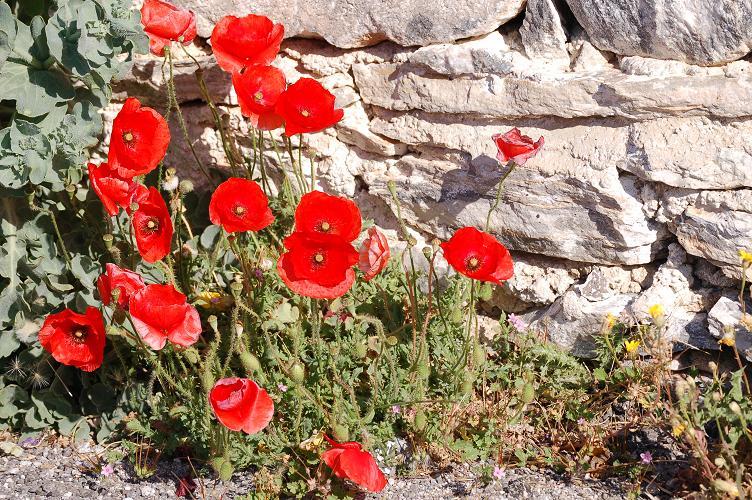 Croisière sur l'Adriana,Istanbul,lesIles grecques,l'Italie Dsc_0811