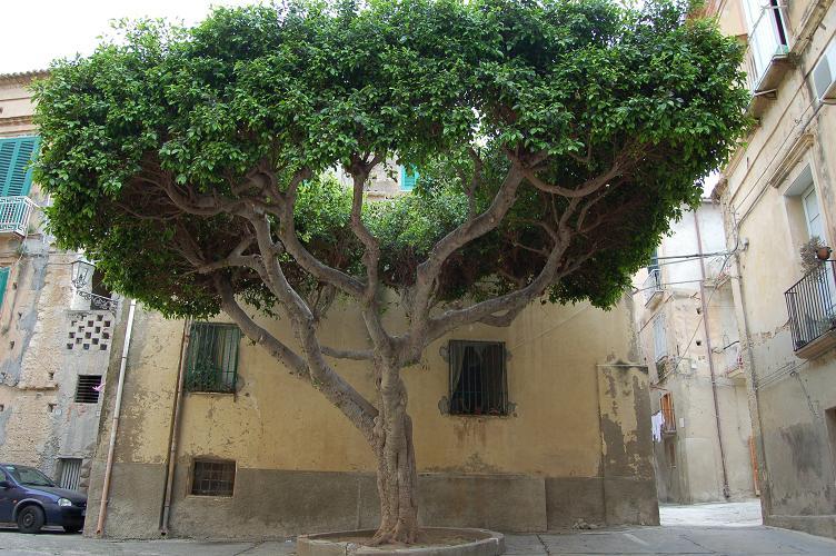 Croisière sur l'Adriana,Istanbul,lesIles grecques,l'Italie Dsc_1115