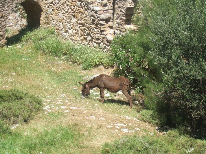 Croisière sur l'Adriana,Istanbul,lesIles grecques,l'Italie Dscf2614