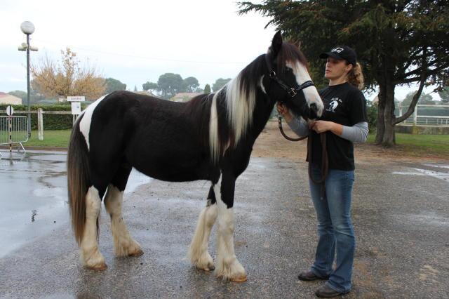 Lisa et Patrick - 18/11/2010 Img_0612